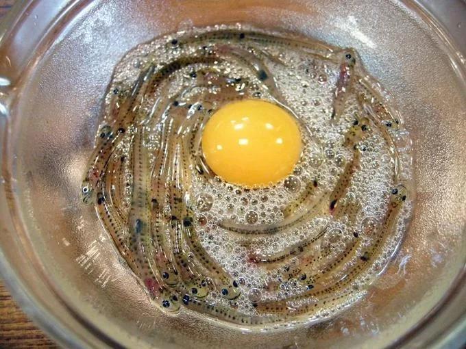 """Cá nhảy múa (Shirouo no Odorigui): Món ăn này có lịch sử khoảng 300 năm với nguyên liệu chính là cá bống băng (Shirouo) có bề ngoài trong suốt. Những con cá nhỏ, còn sống sẽ được đặt trong một tô lớn. Khi bắt đầu ăn, thực khách chuẩn bị thêm một quả trứng, giấm và nước tương. Giấm trộn vào shirouo để làm chúng """"nhảy múa"""" mạnh hơn. Người Nhật thường không nhai mà nuốt sống cá bống và uống cùng rượu sake. Thời điểm lý tưởng nhất để thưởng thức món ăn này là mùa xuân. Ảnh: Wiki-Travel."""