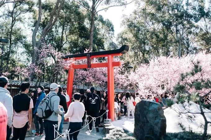Khách tham quan đi qua chiếc cổng của Zen Gardens, nơi có khu vườn kiểu Nhật. Đây là sự kiện nhằm kỷ niệm sự giao lưu văn hoá giữa Australia và Nhật Bản. Lễ hội diễn ra trong chín ngày từ 17 đến 25/8. Vào năm ngoái, lễ hội thu hút 90.000 khách tham quan. Ảnh: Noah Stammbach.