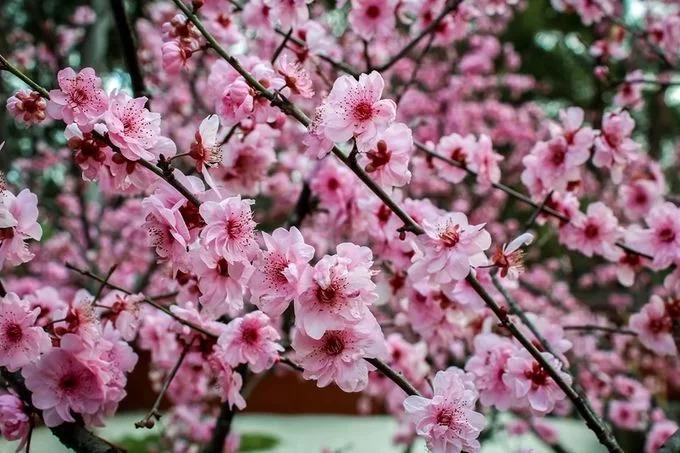 Những cành hoa nở rộ trong ngày 24/8 trong khu vườn. Ảnh: Auburn Botanic Garden.