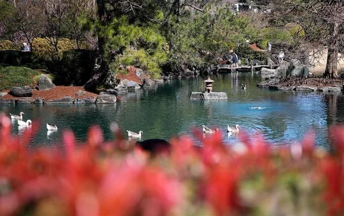 Một góc hồ nước trong vườn thực vật Auburn Botanic Garden. Vé vào cửa với khách du lịch có giá 10 USD. Trẻ em dưới 16 tuổi và người dân địa phương được miễn phí. Ảnh: Xinhua.
