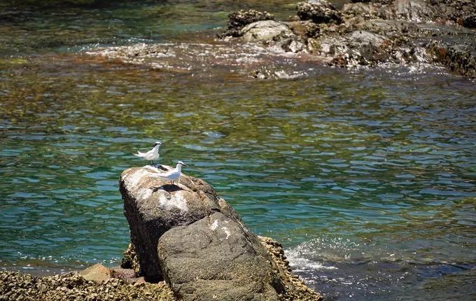 Trên những mỏm đá tại đảo, du khách có thể bắt gặp chim hải âu.