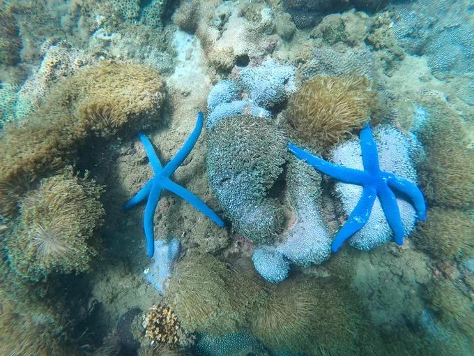 Trong làn nước xanh mát, du khách có thể lặn ngắm những rạn san hô nhiều màu sắc ở độ sâu 2 - 7 m. Hòn Chảo là môi trường sống của hơn 140 loài san hô, 135 loài rong biển và khoảng 160 loài cá.