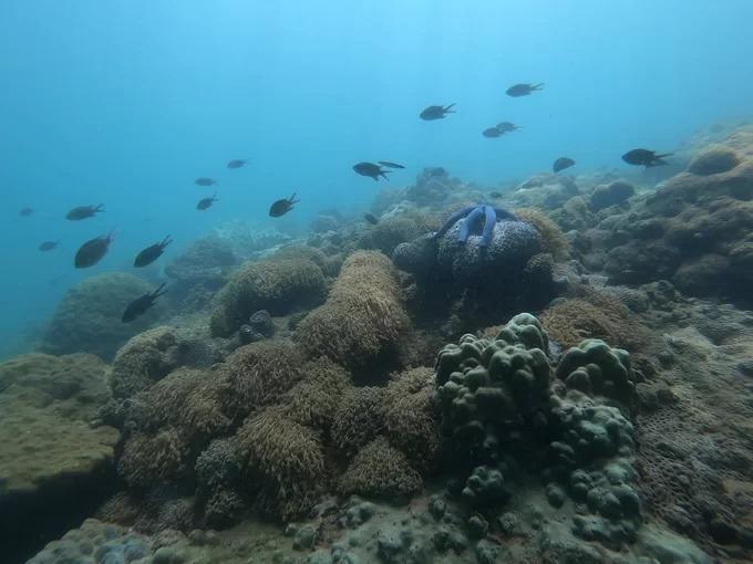 Đàn cá tại một điểm lặn ngắm san hô ở Hòn Chảo. Đây cũng là nơi khách tham quan có thể tham gia vào hoạt động nhặt rác dưới đáy biển.