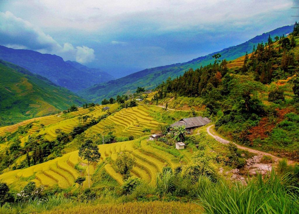 Y Tý (Lào Cai): Ngoài là vùng đất lý tưởng để săn mây, xã Y Tý thuộc huyện Bát Xát, Lào Cai, còn thu hút giới trẻ bởi những con sóng vàng quyến rũ trên từng ruộng lúa chín. Thời điểm này, lúa Y Tý đang gần vào dịp thu hoạch, đã chuyển vàng, thu hút nhiều nhiếp ảnh gia tới đây. Ngoài ra, A Lù, Tả Củ Tỷ, Sàng Ma Sáo… cũng là những địa phương sở hữu mùa vàng nên thơ của huyện Bát Xát. Ảnh: Hồng Lĩnh.