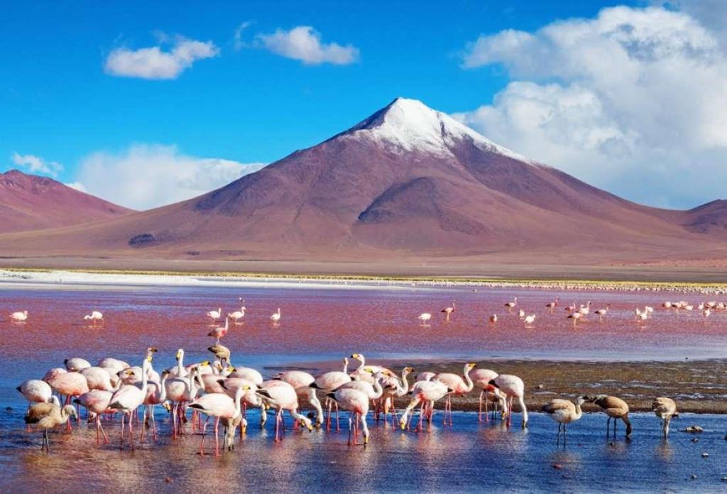3. Laguna Colorada, Bolivia: Lần này không chỉ có hoa tạo nên sắc hồng, mà động vật chính là một phần trong đó. Trung tâm của đầm Laguna Colorada là nơi cư ngụ của rất nhiều hồng hạc. Ngoài ra, đầm nước này có màu sắc thay đổi giữa đỏ, cam và hồng, tùy thuộc vào điều kiện thời tiết hay mùa.
