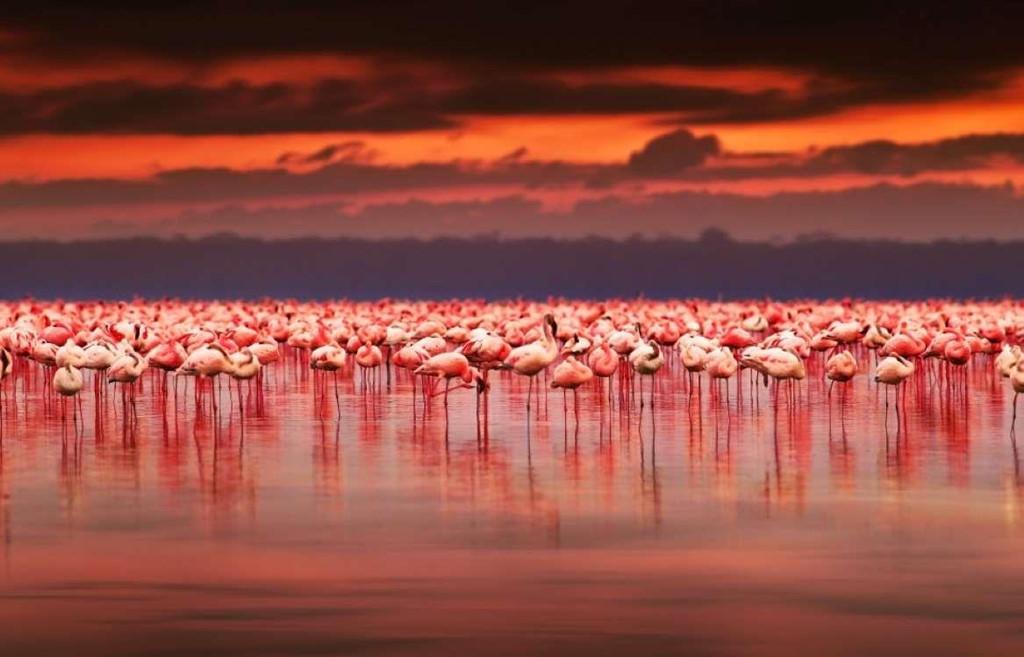 6. Hồ Nakuru, Kenya: Đây là một hồ muối đặc biệt thuộc Công viên quốc gia Nakuru Lake, được thành lập từ năm 1967 ở Kenya. Công viên có mục đích chính là bảo tồn hơn 400 loài chim quý hiếm sống gần hồ, đặc biệt là hồng hạc, loài chim tuyệt đẹp làm cho hồ trở nên tráng lệ hơn bởi sự hiện diện của chúng.