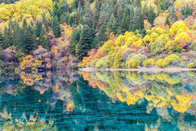 """Cửu Trại Câu  Khoảng tháng 10 hàng năm được xem là thời điểm """"vàng"""" để ghé thăm khu bảo tồn thiên nhiên Cửu Trại Câu. Điểm dừng chân này rộng 60.000 ha, nằm ở độ cao trên 3.000 m, phía bắc tỉnh Tứ Xuyên. Vào thu, nơi đây khoác lên những gam màu từ đỏ yên chi, đỏ thắm đến vàng mơ, màu hổ phách xen lẫn cây lá kim xanh rì phủ bóng xuống lòng hồ. Ảnh: ShutterStock/Mr.Patty."""