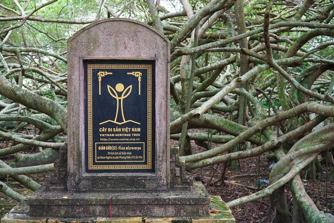 Khu di tích Giàn Gừa đã được UBND TP Cần Thơ xếp hạng là Di tích lịch sử cấp thành phố vào tháng 4/2013. Đây cũng là Cây Di sản Việt Nam đầu tiên tại khu vực Đồng bằng Sông Cửu Long. Dưới những tán cây xum xuê này từng là cơ sở cách mạng trong thời kỳ kháng chiến chống Pháp, Mỹ của quân dân nơi này.