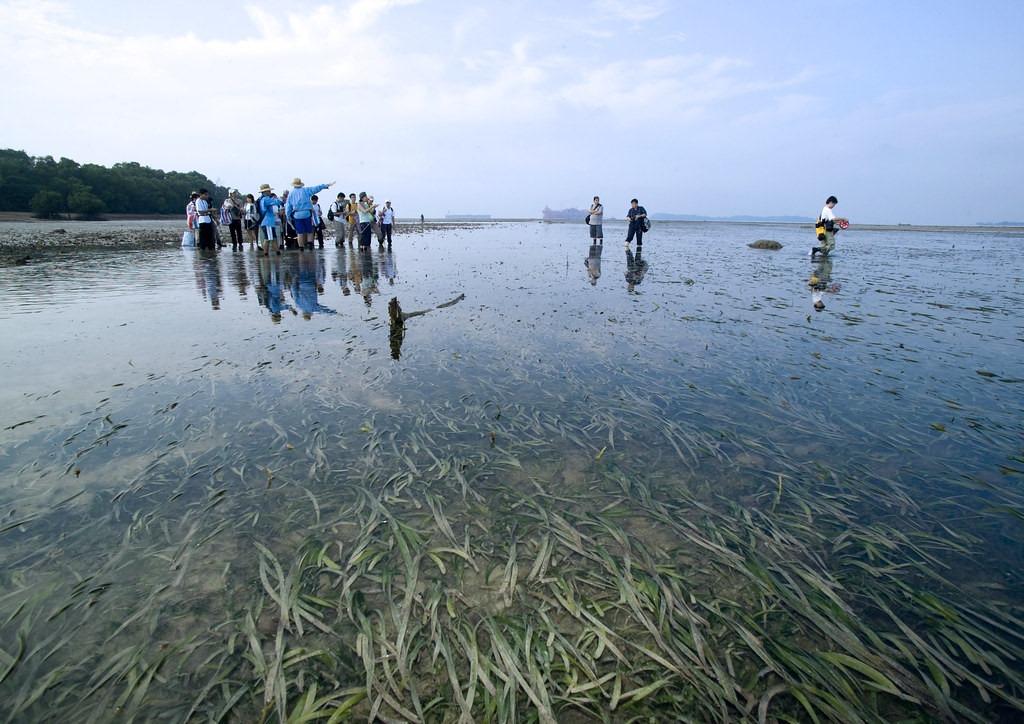 Hệ sinh thái đa dạng, động thực vật phát triển mạnh, đặc biệt là chim và các loài sinh vật biển như rùa, rái cá, cua, sao biển, san hô đã khiến hòn đảo trở nên thu hút khách du lịch. Để tránh làm hại môi trường sinh thái, ảnh hưởng xấu đến tự nhiên, số lượng du khách được phép đến tham quan mỗi năm đều giới hạn dưới sự quản lý chặt chẽ. Ảnh: Flickr.