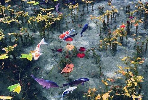 Nhiều người nghĩ ảnh hồ Monet như một bức tranh vẽ, hoặc bánh thạch rau câu. Ảnh: Sora News.