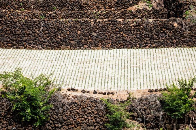 Đi bộ quanh đảo, du khách dễ dàng bắt gặp những tảng đá nham thạch được người dân địa phương đắp thành bức tường, bờ ruộng kiểu bậc thang để trồng hành và tỏi.