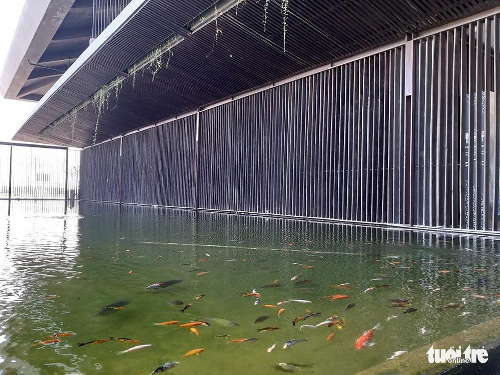 Cùng hồ cá dưới hàng hiên cây rủ - Ảnh: ĐẠI AN