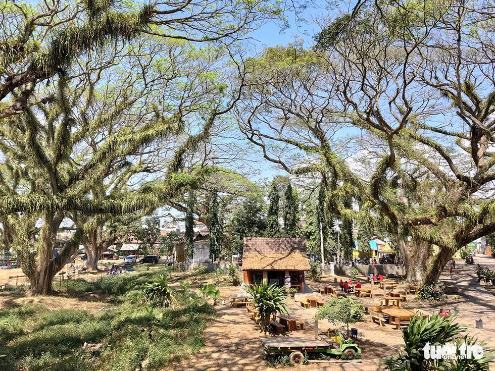 Khu rừng được tô điểm để trông như một công viên chủ đề mang nét hoài cổ - Ảnh: ĐẠI AN