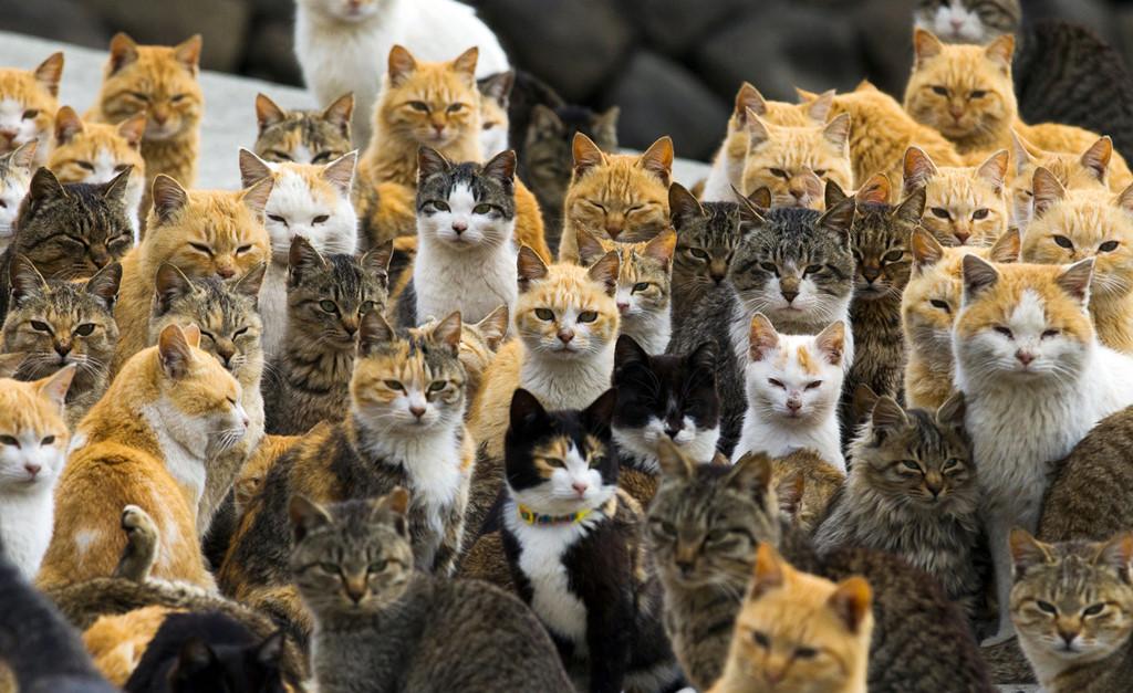 """Đảo mèo: Đảo Tashirojima của Nhật đã trở thành một địa điểm du lịch nổi tiếng cho những người yêu mèo. Với dân số chỉ khoảng 100 người, nơi này thường được gọi với tên """"đảo mèo"""". Người dân Tashirojima tin việc cho mèo ăn sẽ đem lại sự giàu có và may mắn. Ảnh: The Atlantic."""
