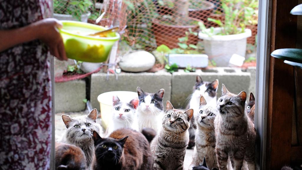 Nơi đây còn có đền thờ mèo và cuộc thi chụp ảnh mèo diễn ra hàng năm. Các du khách yêu loại thú cưng này đổ về đây để được vuốt ve những con mèo thân thiện và không hề sợ người. Chó là loài động vật bị cấm đặt chân tới đảo. Bởi vậy, bạn nên lưu ý nếu muốn dắt thú cưng của mình theo. Ảnh: The Daily Beast.
