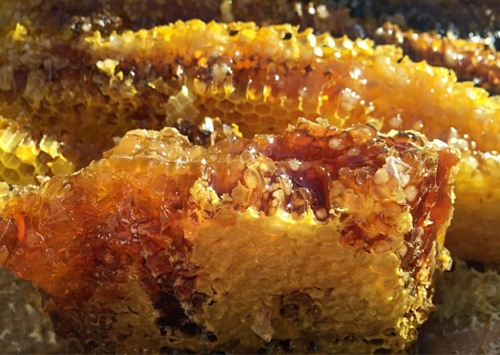Mật ong điên có giá khoảng 120 - 160 USD một ký trên thị trường chợ đen. Ảnh: Interesting Engineering.