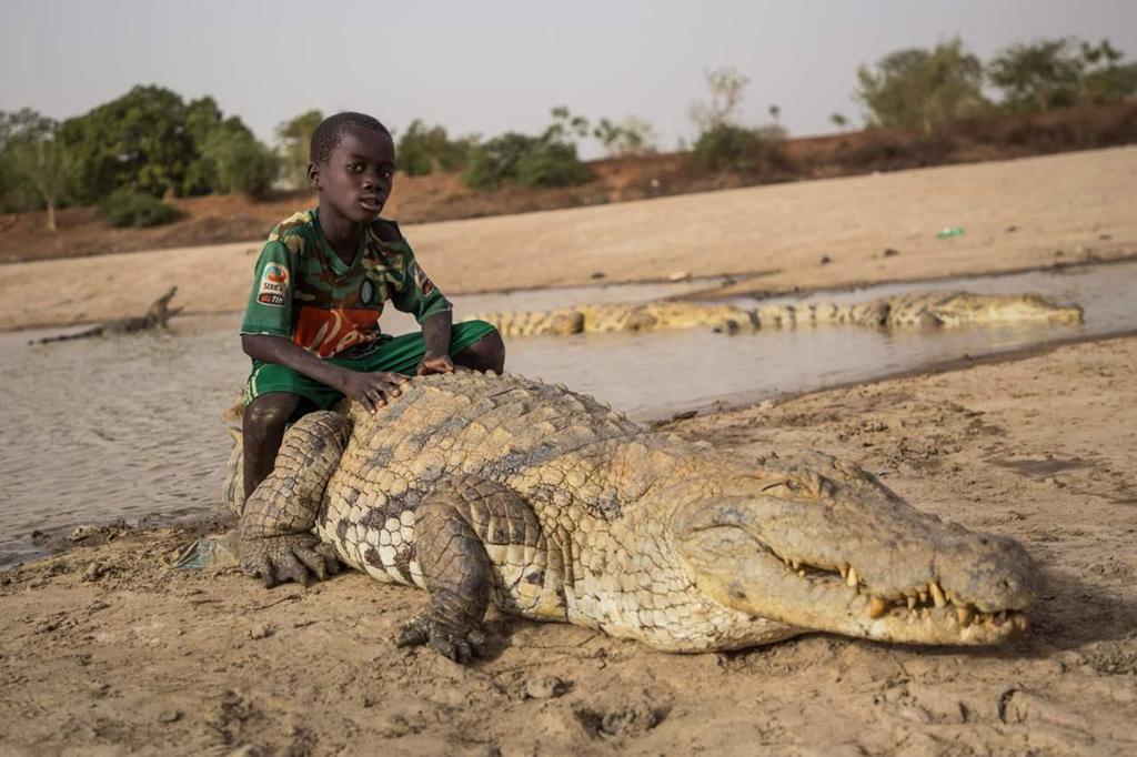 Đến với Bazoule, du khách dễ dàng bắt gặp hình ảnh trẻ con vui đùa trong ao hồ ngay cạnh nơi những con cá sấu đang bơi lội hay nằm nghỉ ngơi. Trẻ em có thể ngồi trên lưng chúng không chút sợ hãi bởi niềm tin rằng cá sấu đại diện cho linh hồn của tổ tiên luôn bảo vệ cho ngôi làng. Khi chết, chúng được chôn cất, thậm chí tổ chức đám tang như con người. Ảnh: Reddit.