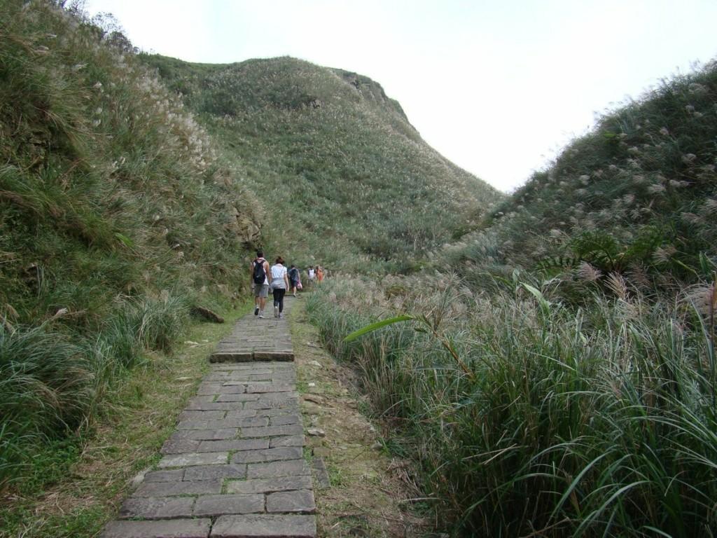 Đường đi bộ tham quan giữa những đồi cỏ bạc. Ảnh: Twitter.
