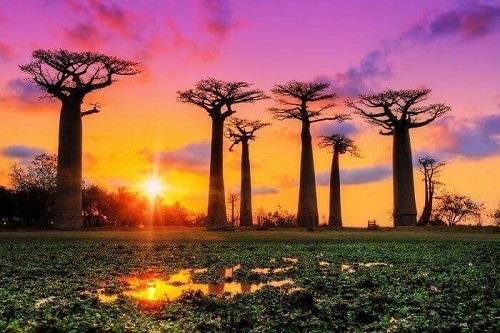 Những điều ít biết về Madagascar – iVIVU.com