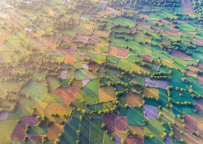 Bình minh trên cánh đồng Tà Pạ, An Giang mùa lúa chín. David Lee, biên tập viên ảnh của National Geographic từng nói anh yêu thích khung hình với những hàng cây đổ bóng trải dài trên cánh đồng.
