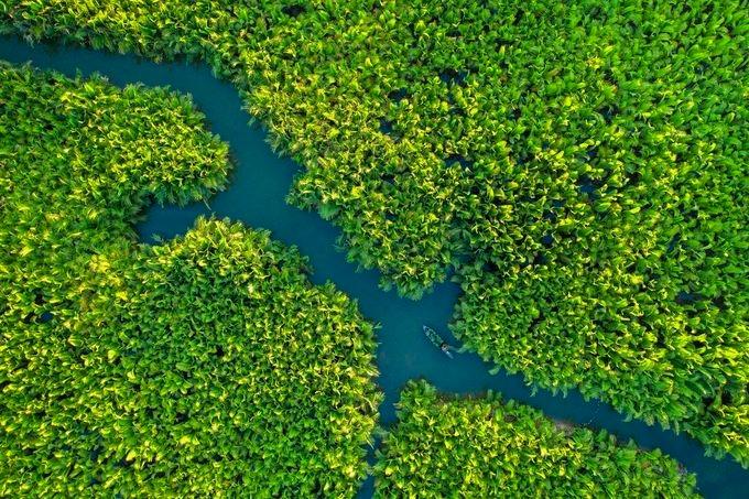 """Một ngư dân chèo thuyền giữa rừng dừa nước Bảy Mẫu, Hội An. Khu rừng nằm cách phố cổ Hội An khoảng 3 km, xuôi theo dòng sông Hoài. Rừng dừa Bảy Mẫu đang là điểm du lịch sinh thái hấp dẫn du khách, được ví như """"miền Tây trong lòng phố Hội""""."""