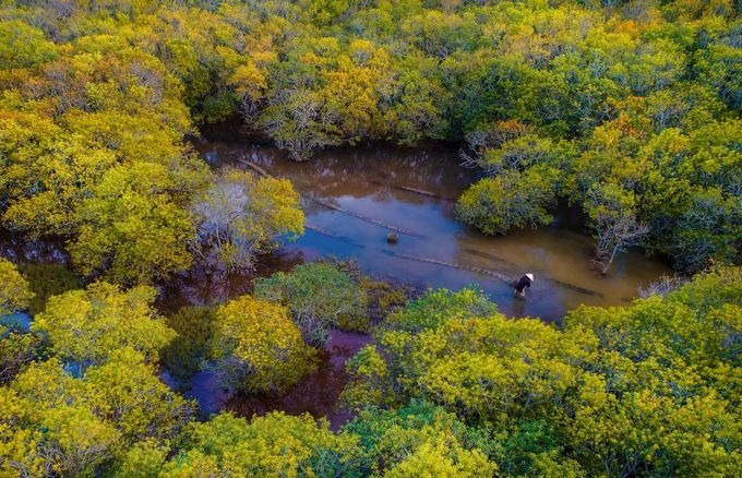 Sắc vàng mùa thu trong rừng Rú Chá ở Huế. Đây là điểm thu hút khách trong thời gian gần đây, nơi có nhiều bạn trẻ đến cắm trại, chụp ảnh. Mùa thu cũng là lúc nhiều nhiếp ảnh gia tới Rú Chá để sáng tác ảnh bởi màu sắc đặc trưng của khu rừng.
