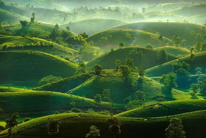 """Đồi chè Long Cốc, Phú Thọ lúc bình minh. Đồi chè này được mệnh danh là """"Vịnh Hạ Long vùng trung du"""", thu hút các nhiếp ảnh gia và khách du lịch tới tham quan, chụp hình."""