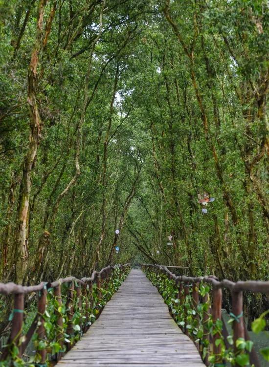 Cây cầu gỗ trong rừng được dựng lên chủ yếu để phục vụ việc ngắm cảnh, chụp hình của khách. Vé tham quan cầu có giá 15.000 đồng một người.