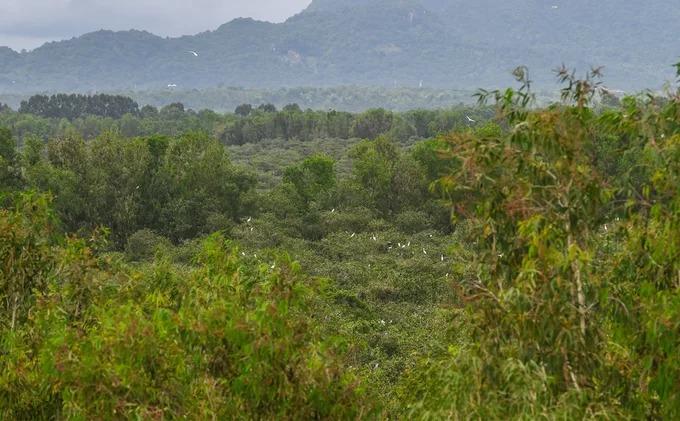 Sau một vòng tham quan, du khách sẽ được đưa tới đài quan sát cao 120 bậc nằm giữa rừng. Từ đây, bạn có thể ngắm toàn cảnh khu rừng, điểm xuyết bởi màu trắng của hàng trăm con cò đậu trên ngọn cây.