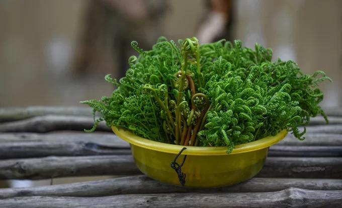 Bên cạnh các loài cá đặc trưng của miền Tây theo mùa, người dân và các quán ăn trong rừng tràm còn đi thu hái ngọn rau dớn (thuộc họ dương xỉ) làm thức ăn. Loài cây này được chế biến bằng cách luộc hoặc xào như các loại rau khác.