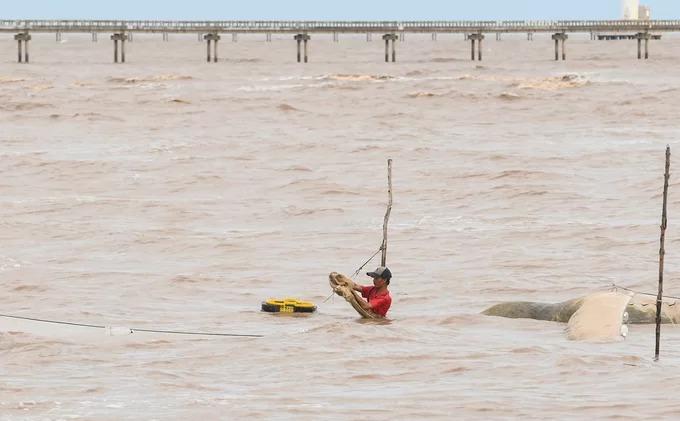 Khi đi bộ tham quan cánh đồng điện gió, khách sẽ thấy các lồng nuôi cá kèo của người dân ở ven biển. Cá kèo là đặc sản của vùng sông nước Cửu Long, nổi tiếng bởi hương vị riêng, thịt trắng, ngọt, mềm và giàu chất dinh dưỡng.