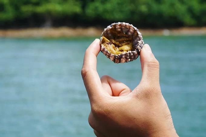 Sau cùng, ông cắt đôi nhum. Vì trên biển không có bếp nướng, nhum thường được ăn sống. Thịt nhum có màu vàng nhạt, ăn bùi bùi. Tuỳ theo kích thước mà phần thịt bên trong sẽ nhiều hoặc ít. Du khách có thể bôi ít mù tạt vào rồi ăn hoặc như ông Thành, chỉ cần vắt một lát chanh kèm chút muối ớt đâm là đã có thể thưởng thức ngon lành.