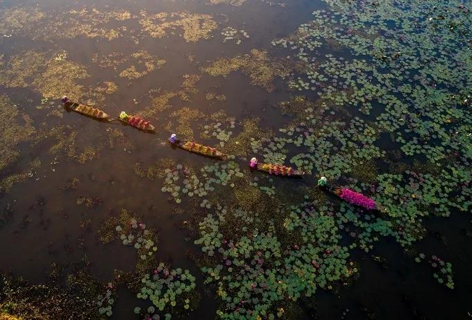 Mùa hoa súng các tỉnh đồng bằng sông Cửu Long vào khoảng tháng 9-10. Đây cũng là lúc các nhiếp ảnh gia từ khắp nơi hội tụ về để săn những góc ảnh đẹp. Nhiều bà con, cô gái thôn quê đồng ý làm mẫu ảnh nông dân hái hoa súng.