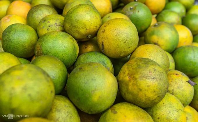 Du khách tới Đồng Văn nên thưởng thức cam Hà Giang, đặc sản của vùng đất này. Giống cam tại đây đặc trưng bởi lớp vỏ rám sạn, mang vị ngọt đậm và mát khi đã chín hẳn. Bạn có thể bắt gặp những vườn cam đang trong mùa thu hoạch ở ngay hai bên đường, giá bán khoảng 30.000 đồng một kg.