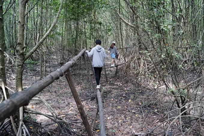 """Du khách đến Đất Mũi có thể trải nghiệm đi cầu khỉ xuyên rừng để khám phá hệ sinh thái rừng ngập mặn. Hàng năm nơi này vẫn lấn biển do hoạt động phù sa. Hai loại cây phổ biến ở đây là mắm và đước. Cây mắm thường mọc trên đất bồi, rễ đâm ngược lên để giữ đất, tiếp đến là đước và những cây trong rừng ngập mặn khác như sú, vẹt. Đó là lý do Cà Mau được ví là nơi """"đất biết nở, rừng biết đi và biển sinh sôi""""."""