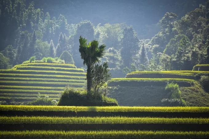 Gợi ý cung đường săn ảnh lúa chín Hà Giang: Thông Nguyên – Nậm Khòa – Tả Sử Choong – Bản Phùng.
