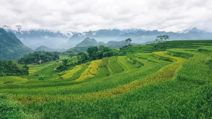 Sáng sớm, bạn có thể bị đánh thức bởi mùi sương quyện hương lúa chín ngào ngạt. Ngoài khung cửa sổ, những cụm mây lang thang ngang qua thung lũng, đậu trên các cánh đồng, trên hạt lúa thơm.