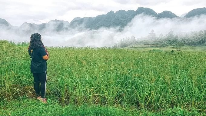 Khoảnh khắc mây quyện lúa thường mau chóng biến mất khi nắng lên, sương tan.