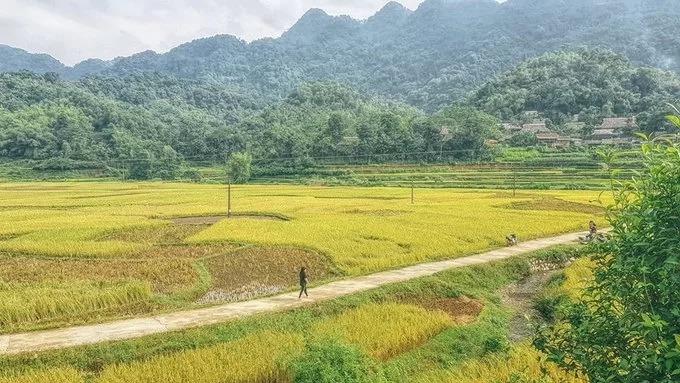 Bạn có thể đi bộ men theo các thửa ruộng, băng qua cánh đồng ngô sóng sánh, hướng đến những guồng quay nước của người dân tộc Thái nằm ven bờ suối.