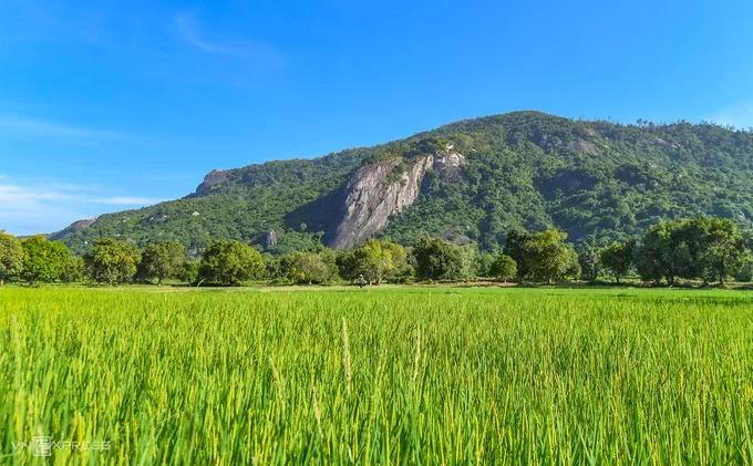 Cánh đồng Tà Pạ nằm dưới chân núi Tà Pạ và Cô Tô (ảnh). Nơi này thuộc vùng Thất Sơn – bảy ngọn núi ở đồng bằng miền Tây Nam Bộ, trên địa phận hai huyện Tri Tôn và Tịnh Biên.