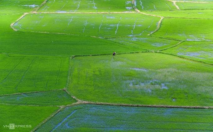 Một góc cánh đồng nhìn từ núi Tà Pạ. Địa hình bằng phẳng bên dưới mang đến cho khách tham quan tầm nhìn trải rộng về những ruộng lúa và lối đi xung quanh.