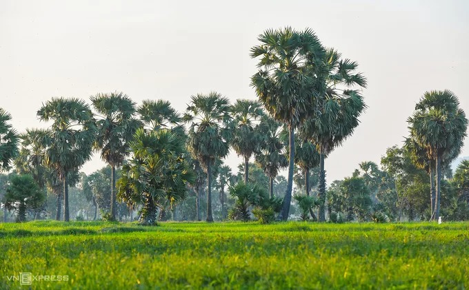 An Giang còn được biết đến là xứ sở cây thốt nốt ở Việt Nam. Nếu khởi hành đến Tà Pạ từ thành phố Châu Đốc, du khách cũng nên ghé vào những vùng trồng cây thốt nốt nằm hai bên đường. Đa phần vùng thốt nốt đẹp nhất ở gần trục đường chính, một trong số đó là dãy thốt nốt ở phía sau chùa Sđach Toth, cách thành phố Châu Đốc khoảng 23 km.