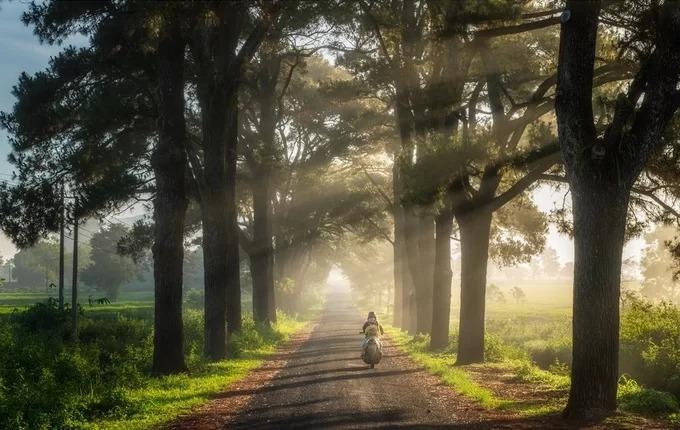 Nắng sớm trên con đường dài khoảng 800 m với hàng thông hai bên, đi qua thôn 1, xã Nghĩa Hưng, huyện Chư Păh. Hai bên đường là những cây thông trên 100 năm tuổi.