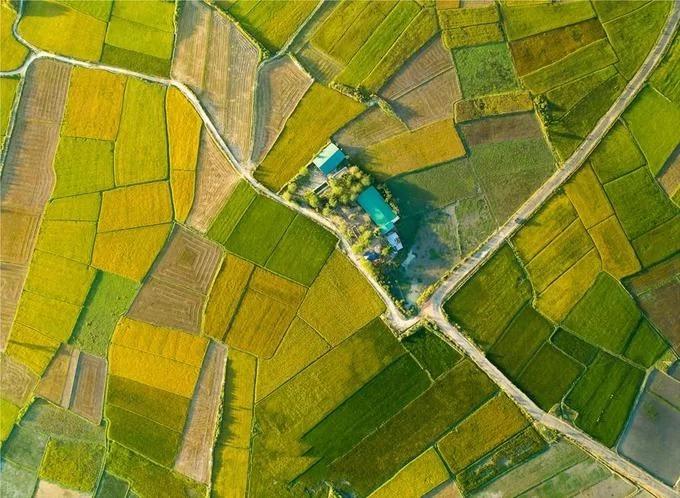 Cánh đồng lúa Chư Yo, huyện Chư Pah nằm nép mình bên đồi núi cao nguyên trong mùa lúa chín vàng.
