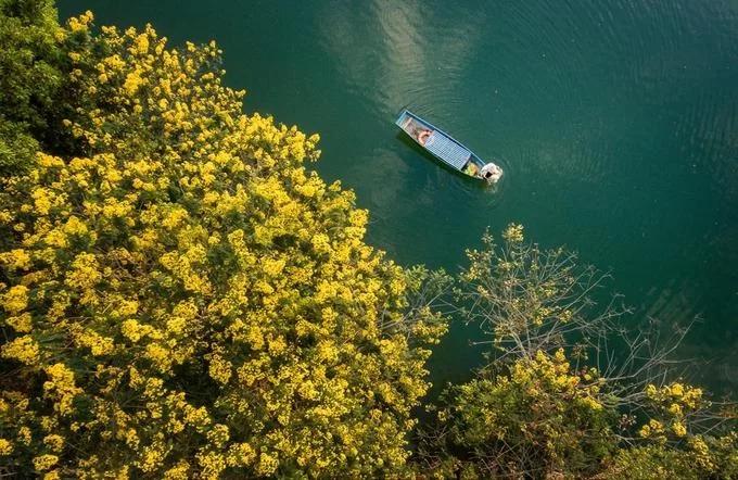 Mùa hoa muồng vàng nở rộ ven hồ ở xã Bàu Cạn. Hàng năm từ giữa tháng 10 đến cuối tháng 11, hoa muồng vàng nở rộ, điểm xuyết những mảng màu sắc cho vùng đồi chè Bàu Cạn rộng lớn. Ngoài Bàu Cạn, du khách có thể bắt gặp cây muồng tại các đồn điền chè, trong công viên, dưới chân đồi, ven hồ hay các nẻo đường đất đỏ...