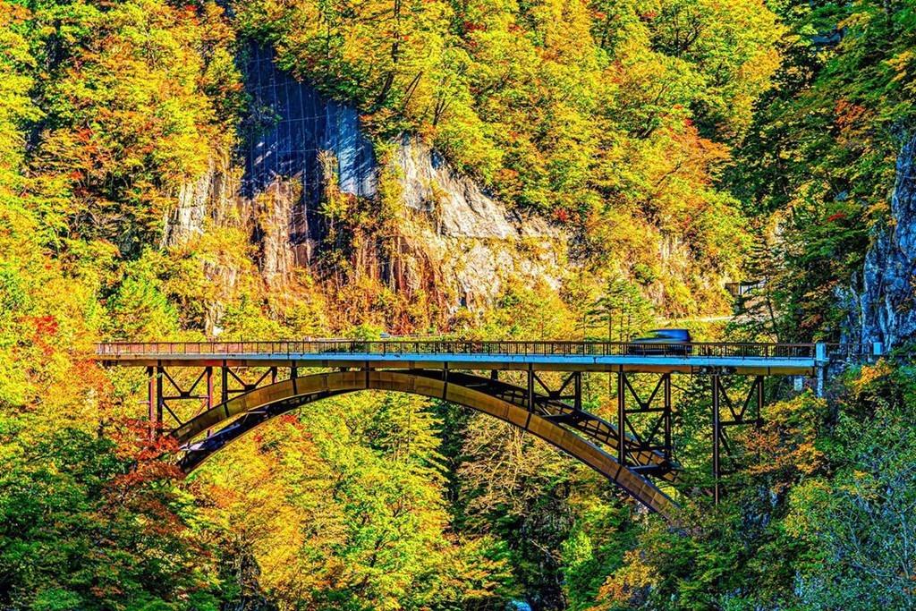 Đoạn đường Hakusan Shirakawa-go chạy qua núi Hakusan, nối liền thành phố Hakusan và làng cổ Shirakawa (tỉnh Gifu). Đây là cung đường bạn không thể không dừng chân khi trong hành trình đến làng Shirakawa. Con đường nhỏ được bao quanh bởi rừng cây lá vàng, lá đỏ, tạo khung cảnh vừa hùng vĩ vừa thơ mộng. Ảnh: Enohagogi.