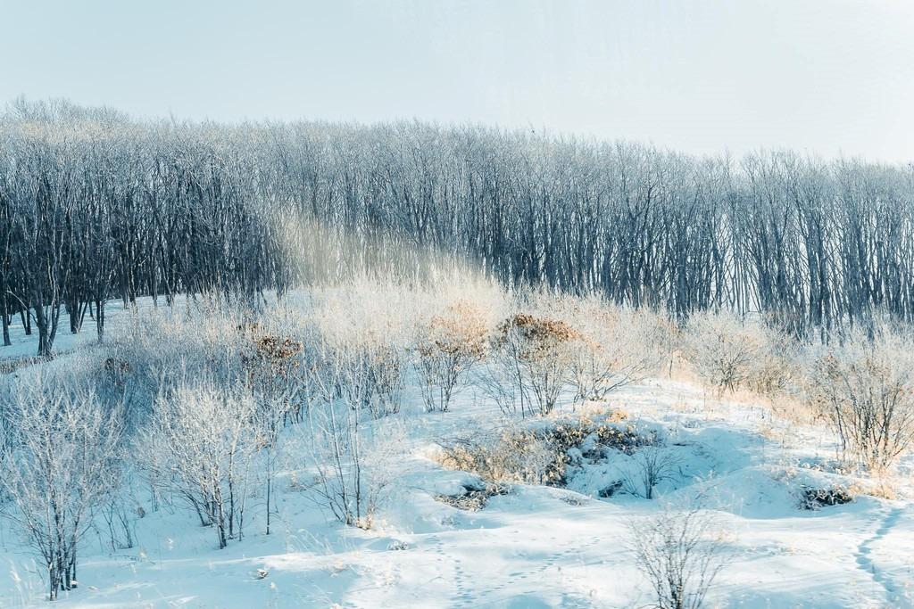 """Tới Hokkaido (Nhật Bản) mùa tuyết, du khách nào cũng ao ước được chiêm ngưỡng khung cảnh trắng tinh khôi cùng những bông tuyết rơi dưới ánh nắng Mặt Trời lung linh, đẹp tựa kim cương. Hiện tượng bụi kim cương đã trở thành """"đặc sản"""" của vùng đất lạnh nhất Nhật Bản vào mùa đông. Ảnh: Nguyễn Thế Vinh."""