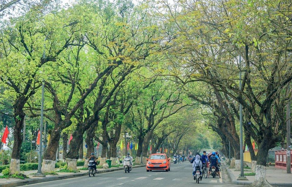 Lê Lợi, Đoàn Thị Điểm, Phan Đăng Lưu hay những con đường nội thành khác đều mang dấu ấn đậm chất thu ở xứ Huế. Ảnh: Lê Anh Tuyền.