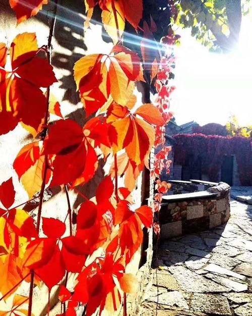 Ngoài tường rêu, đường lát đá thô sơ, làng Gubei vẫn giữ được nhiều chiếc giếng cổ. Không chỉ hấp dẫn vào mùa thu, mùa đông cũng được nhiều gia đình Bắc Kinh lựa chọn làm nơi nghỉ dưỡng bởi các lễ hội băng tuyết, khu trượt tuyết và các triển lãm trưng bày tác phẩm băng đá.