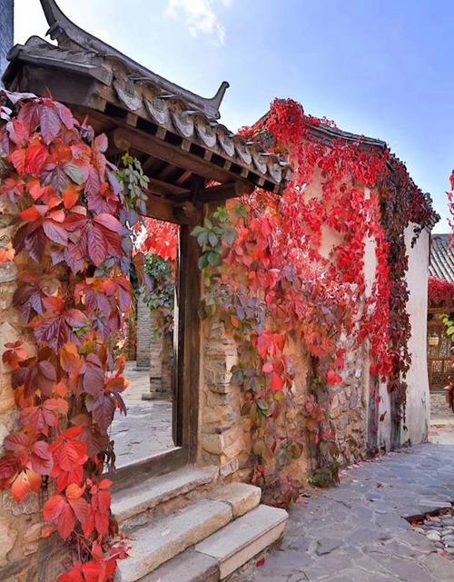 Đặc biệt, nhiều căn nhà trong làng vẫn giữ nguyên lối kiến trúc Trung Quốc phong kiến điển hình với tứ hợp viện.
